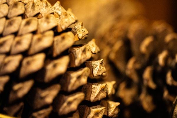 Pine Cone by Merlin_k