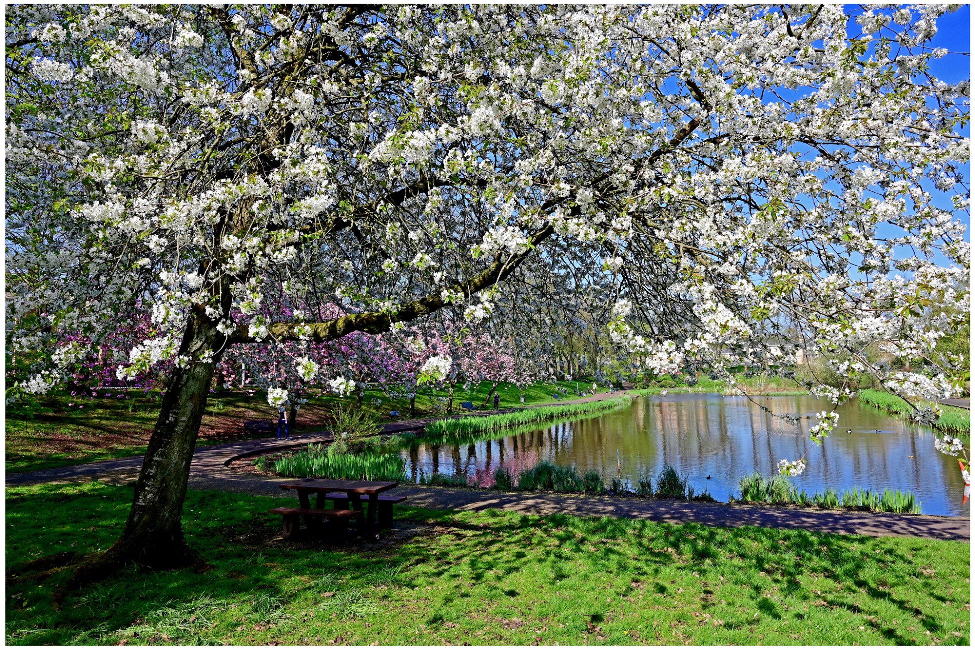 """""""Blossom Time"""""""