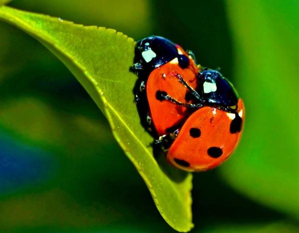 Lovebugs by georgiepoolie