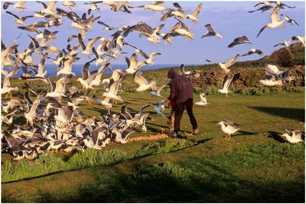 Feeding the Gulls by dark_lord