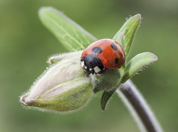 Ladybird by doverpic