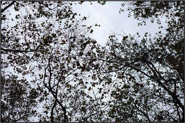 twigscapes by FabioKeiner