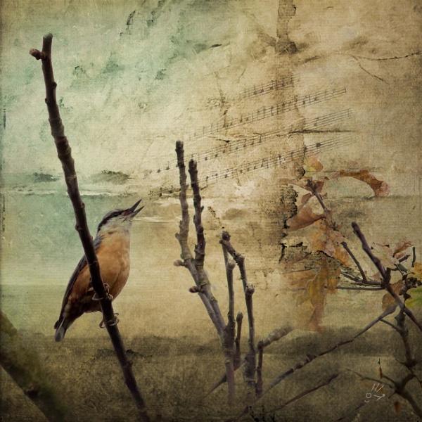 Songbird by AlanJ