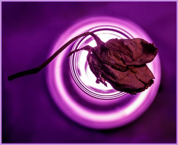rosebud... by estonian