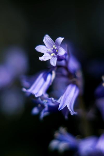 Blue in the garden by Madoldie