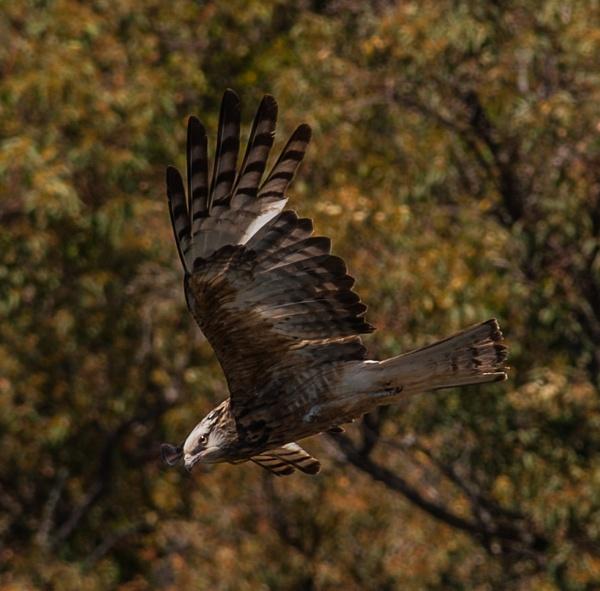 On the hunt by Heyneker