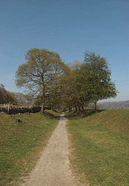 A shady walk by canoncarol