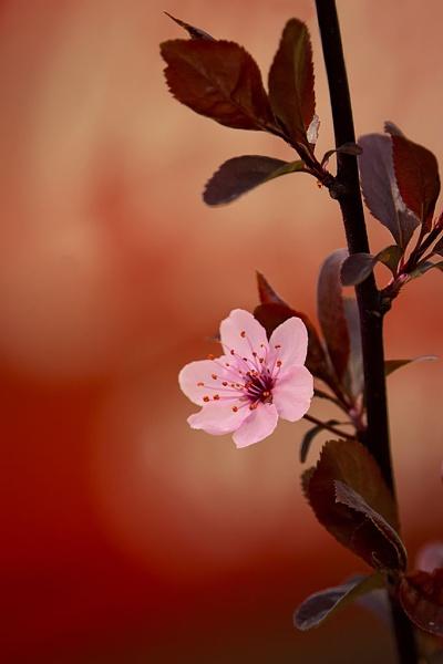 Spring H89 by LaoCe