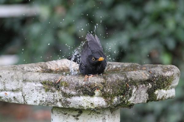 Bath time by RossiT123