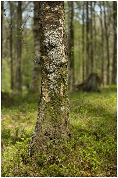 Textured Tree by JelFish