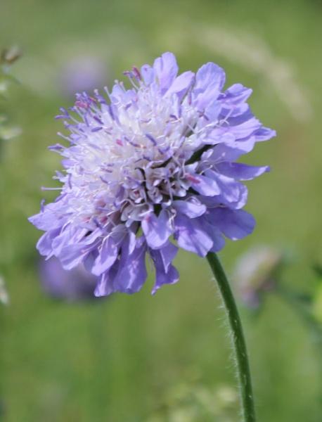 Wild Flower by BRobins