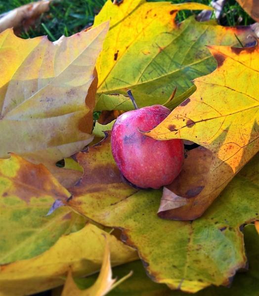 Apple in Autumn by AliEscobar