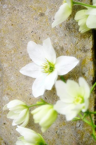 In the Garden by photographerjoe