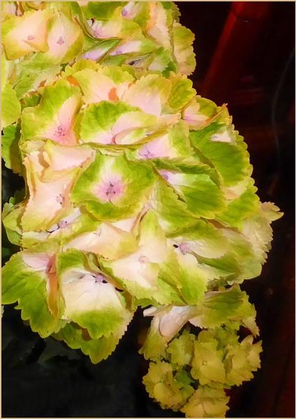 Green Hydrangea by Joline