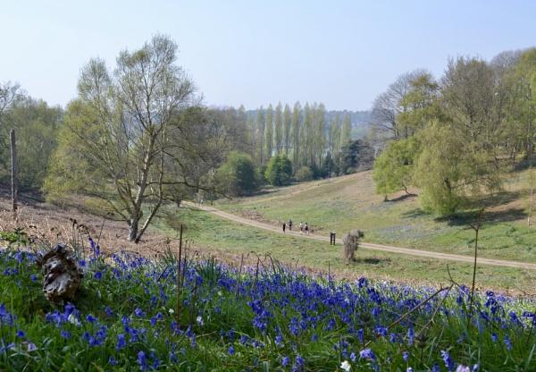Bluebell Walk by cathsnap