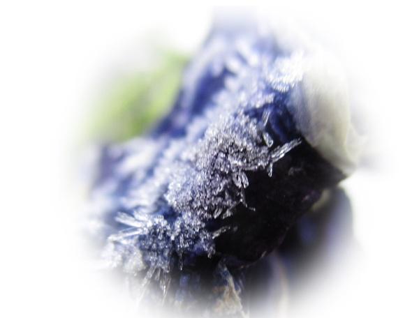 Frozen Pansy by ELLISON58
