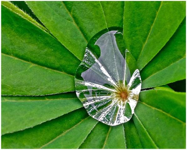"\""Leafy Lens\"" by RonnieAG"