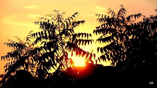 ""\"""" SETTING SUN """" by abssastry""600|338|?|en|2|8a8a6c316e8397731dabdaa13652cd6d|False|UNLIKELY|0.2993369400501251