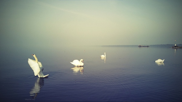 Antrim - N.Ireland - Lough Neagh - dance with me by atenytom