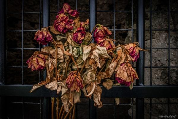 Roses In Memoriam by NDODS