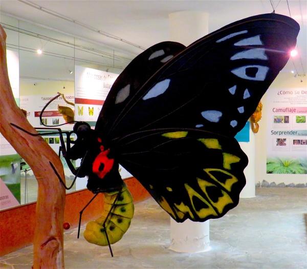 A 600 pound butterfly by ddolfelin