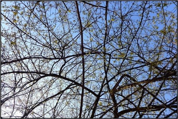springbloom 2 by FabioKeiner