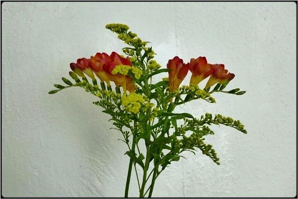 flowers by FabioKeiner