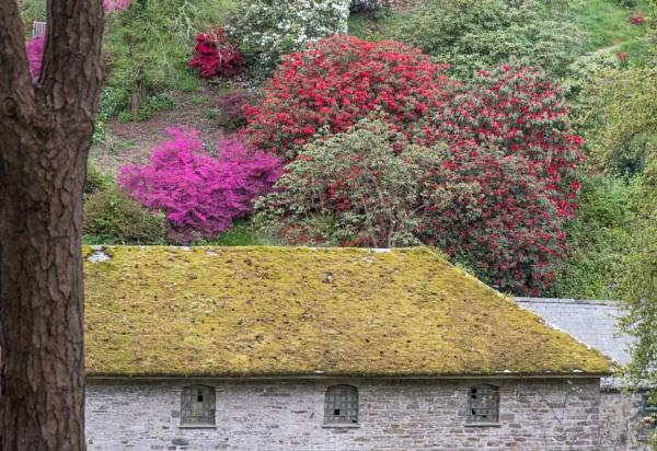 Bodnant Gardens by Danny1970