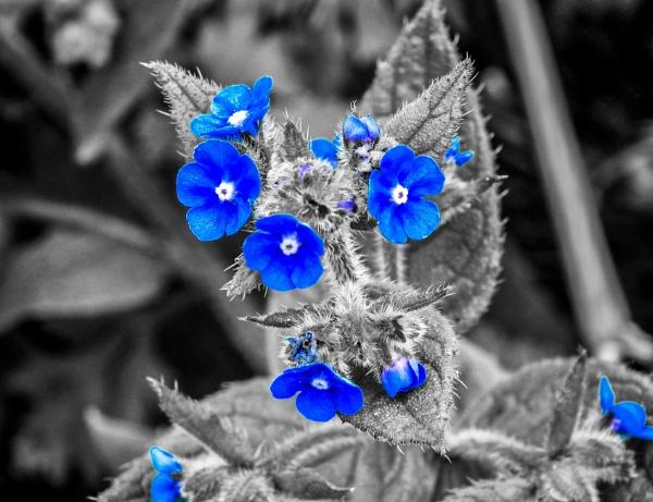 Flowers by KrazyKA