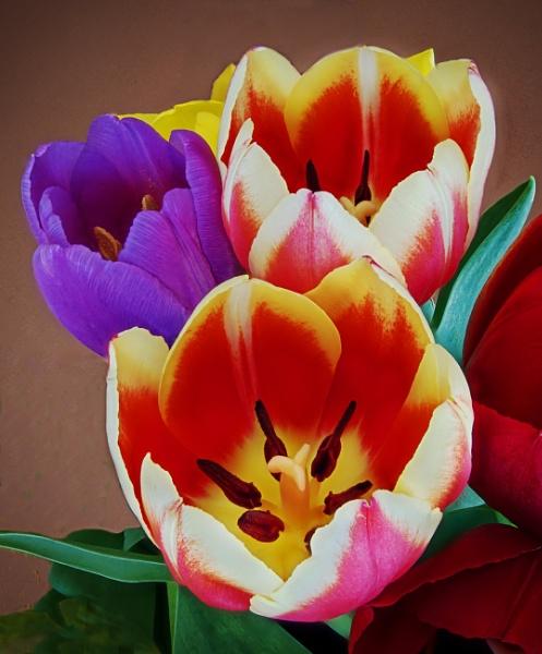 Three Tulips by Minty805