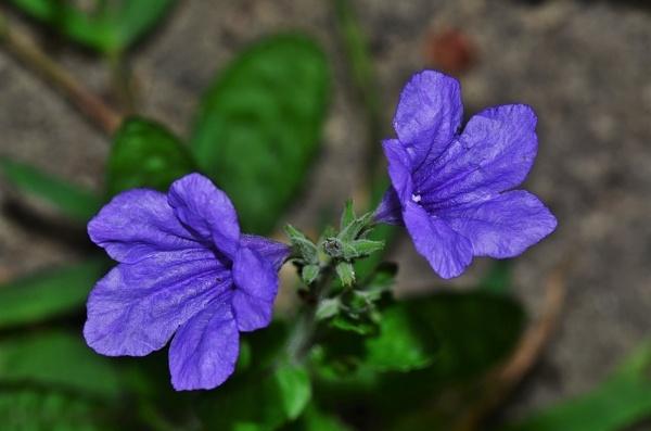 Flowers by pedromontes