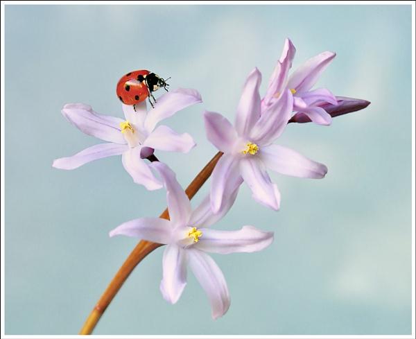 Ladybird # by bricurtis