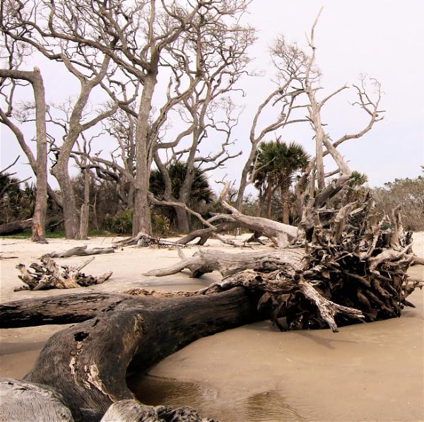 Jekyll Island, GA by maureenwaite