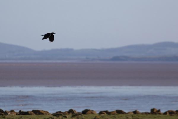 As the Crow flies by royd63uk