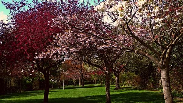 Spectrum Blossom by Theadditionalneedsphotographer