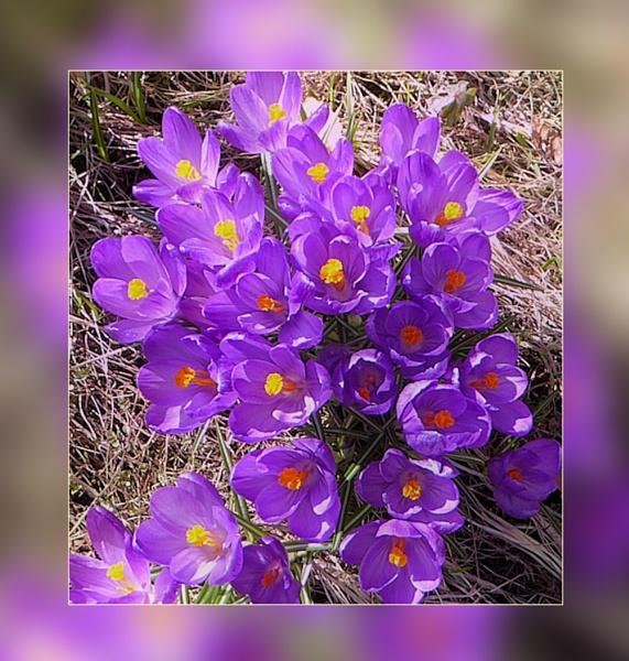A Burst of Bloom by Joline