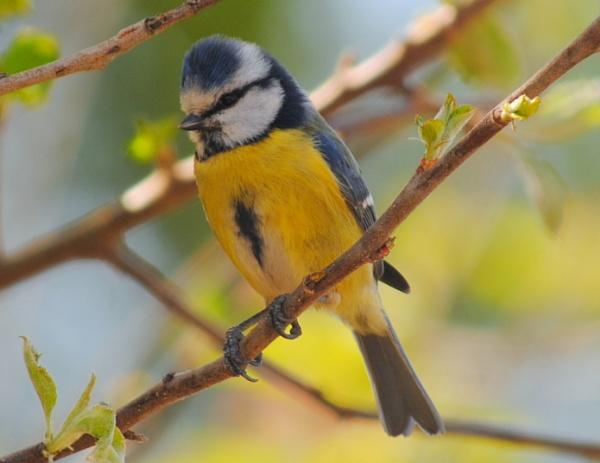 Garden Bird by CHIPPYX1X