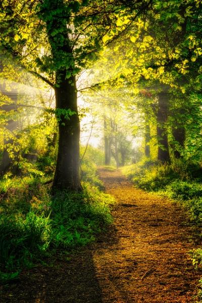 The Sunlit Path by douglasR