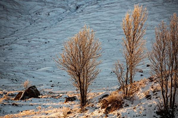 Tree\'s in winter light by rontear