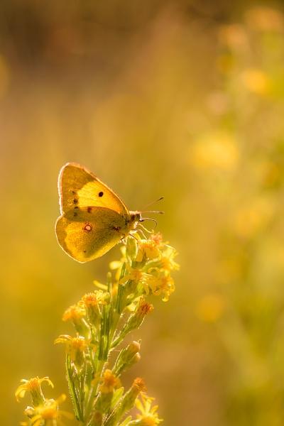 ton sur ton in yellow by olafo