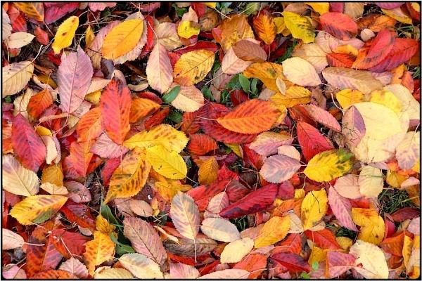 leaf carpet by FabioKeiner
