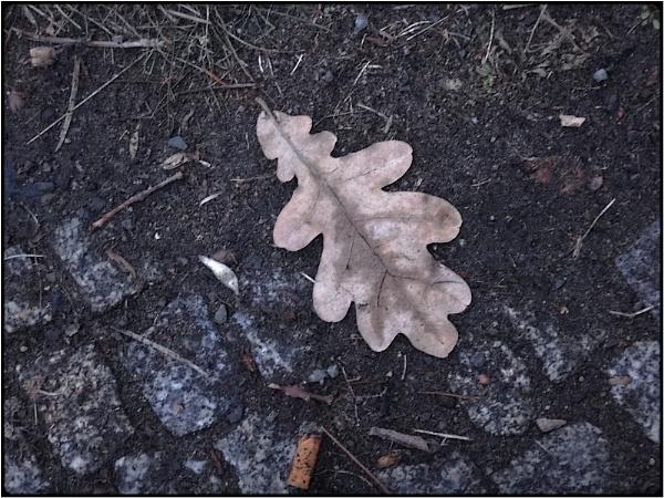 bleak leaf by FabioKeiner