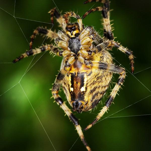 Incey wincey spider by Derek897