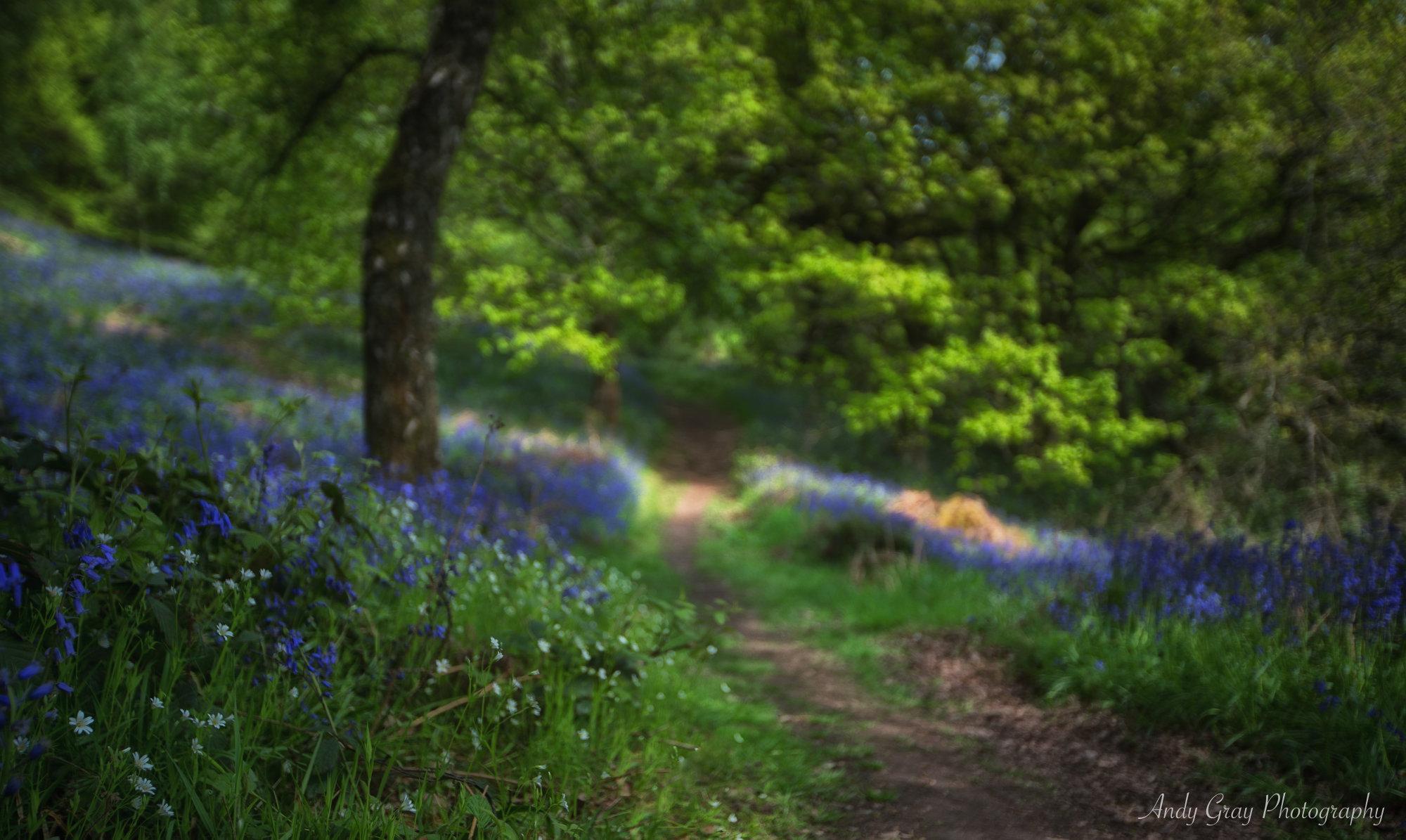 Bluebell Walk