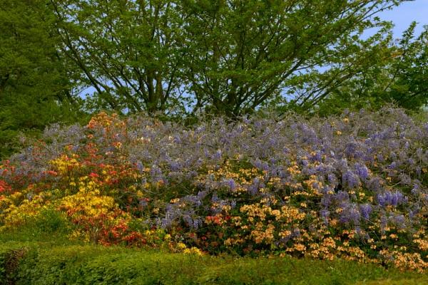 Emmetts Garden by JJGEE