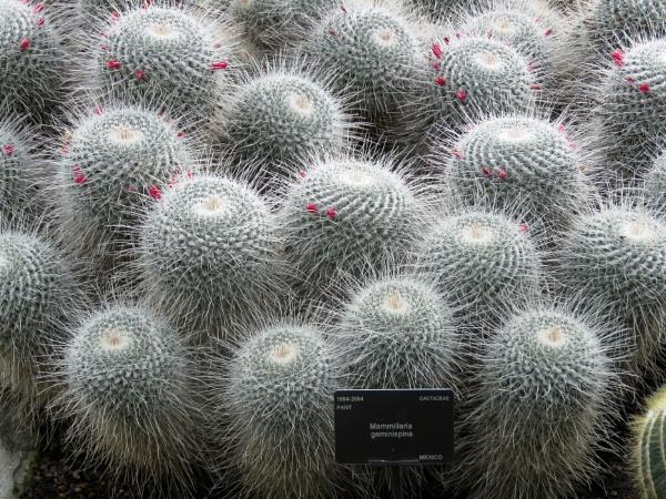 Cacti at Kew gardens by newbe2