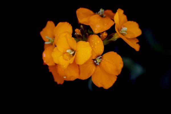 Orange flower by OverthehillPhil