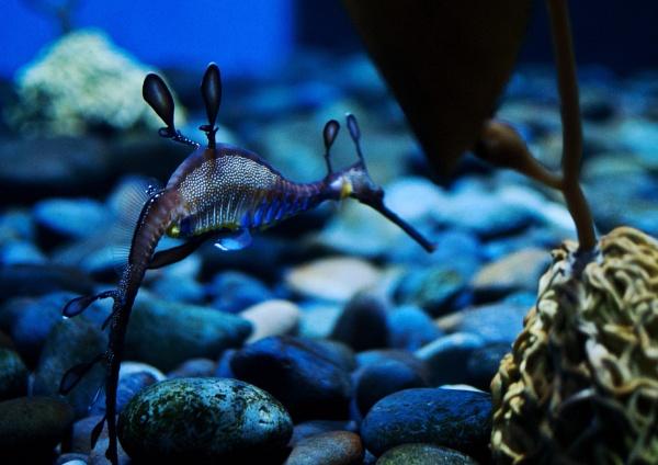 Toronto Aquarium by barryyoungnz