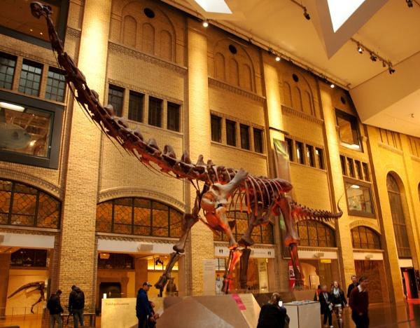 Dinosaur - Toronto Museum by barryyoungnz
