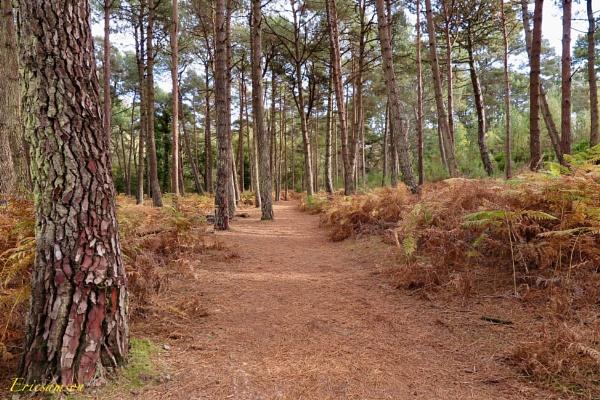 Woodland walk by Ericsamson